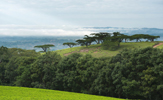 Huntingdon House Satemwa Tea Estate