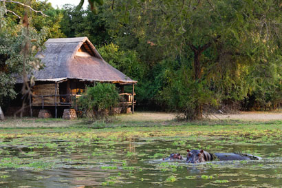 South Luangwa National Park Zambia