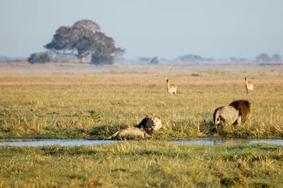 Zimba Safaris | Kafue National Park Zambia