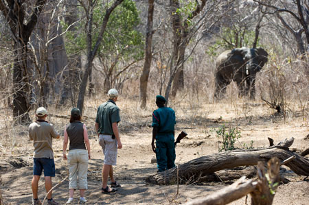 Majete Game Reserve Safari Malawi