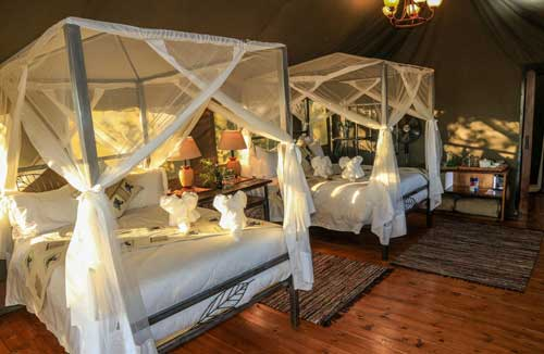 Bomani safari Camp - Hwange