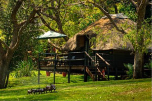 Kubu Lodge - Chobe