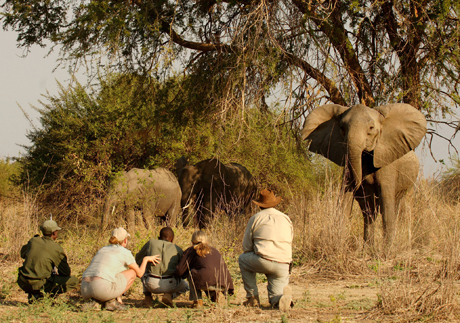 South Luangwa Norman Carr Safaris